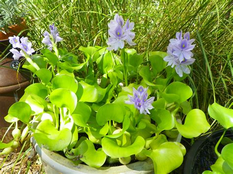 water plants water plants will inspire you to find a sunny locale for your backyard pond garden drama