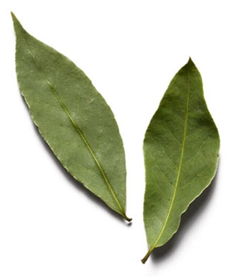 bay leaf replacement rfa bayleaf
