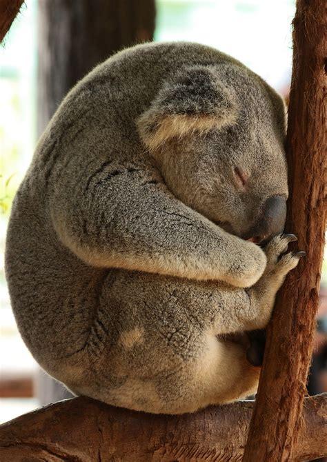 Bin Ich So Müde Foto & Bild  Tiere, Wildlife, Wildlife