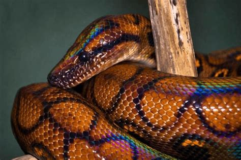 What Types Of Snakes Live In The Desert?