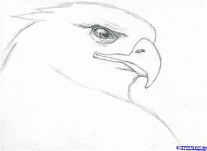 How To Draw Birds Face Let's Celebrate Our June Draw A ...