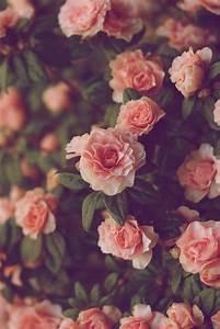 Vintage-roses-tumblr-wallpaper-7.jpg | HD Wallpapers, HD ...