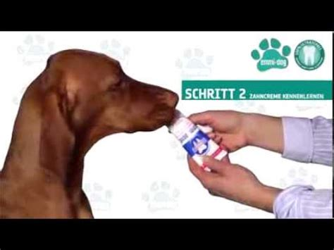 emmi pet fuer hunde und ultraschallzahnbuerste youtube