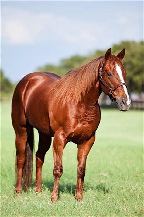 quarter horses famous frenchman frenchies
