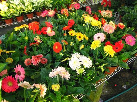 garden items sri lanka home outdoor decoration