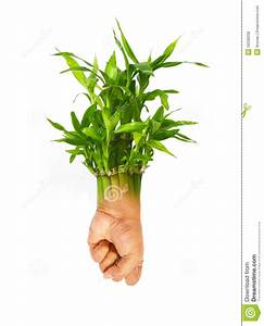 Fortune Plant Sapling With Human Hand As Roots Stock Photo