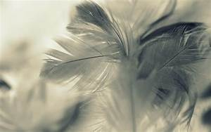 Feather Full HD Wallpaper and Background | 2560x1600 | ID ...