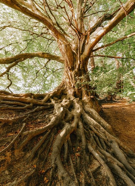 tree roots wallpapers high quality
