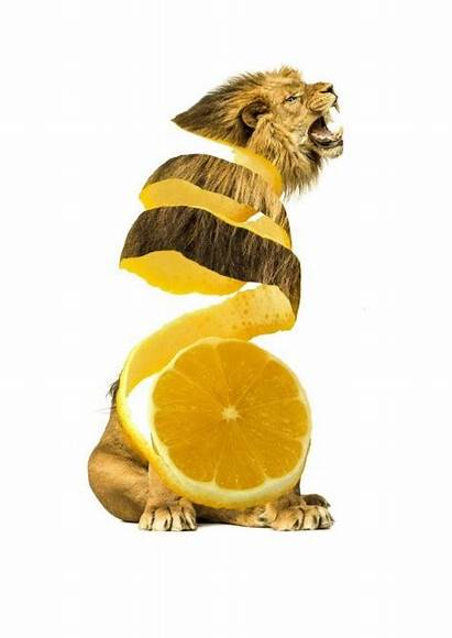 Animals Fruit Photoshopped Animal Strange Vegetables Mashup
