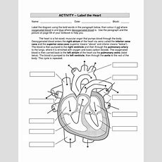 The Heart Diagrams Labeled And Unlabeled  Printable Diagram
