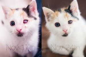 eye infections in cats antibiotics for eye infections