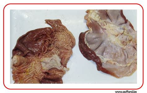 pied de cuisine estomac goffard scrl