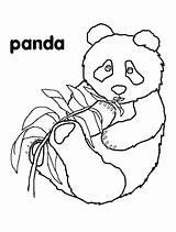 Coloring Pages Panda Pandas Bears Cute Bear Hibernation Bamboo Eating Printable Children Animal Animals Colouring Wood Ones Crafts Burning Kindergarten sketch template