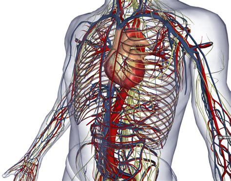 biodigital  human visualization platform  anatomy
