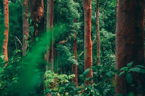Why We Should All Care About the Amazon Rainforest ...