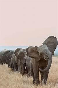 elephants on Tumblr