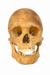Old Prehistoric Human Skull Isolated Stock Photo
