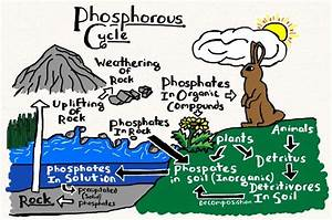 phosphorus cycle cartoon - Google Search   Environmental ...