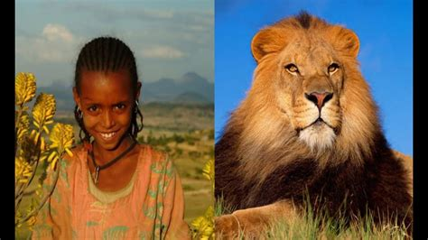 unbelievable wild animals   saved peoples