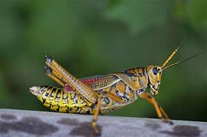 10 Fascinating Facts About Grasshoppers