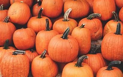 Pumpkin Autumn Harvest October 4k Ripe Ultra