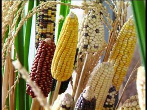 การปรับปรุงพันธุ์พืช | siwaleeblog