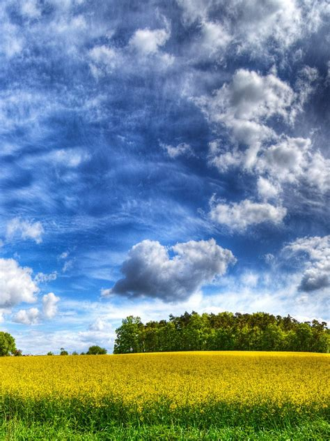 nature cloudy sky   yellow field hdr ipad