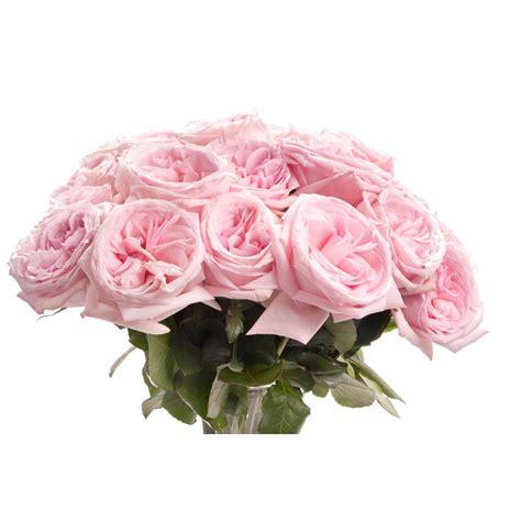 light pink roses light pink garden bouquet flower muse