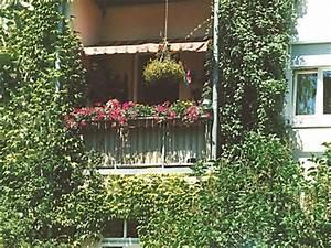 Kletterpflanzen Für Balkon : haus garten kletterpflanzen sorgen f r sichtschutz auf dem balkon bauherren immobilien ~ Buech-reservation.com Haus und Dekorationen