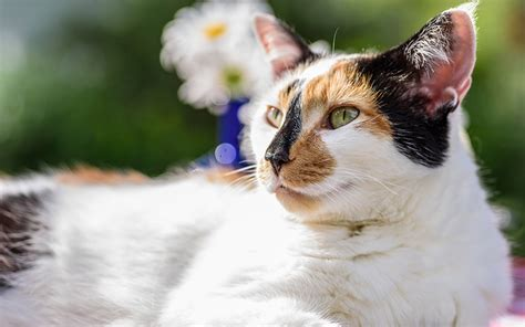 names for calico cats calico cat names 120 great ideas for naming your calico kitty