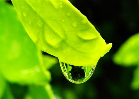 amazing pictures  rain drops incredible snaps