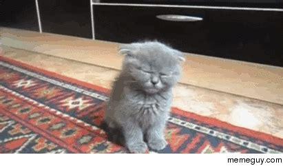 tired kitty struggling  stay awake meme guy