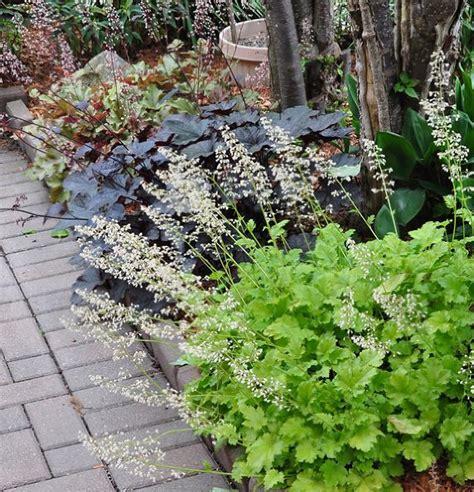 deer resistant shade perennials 17 best images about deer resistant plants on pinterest shade garden shrubs and deer
