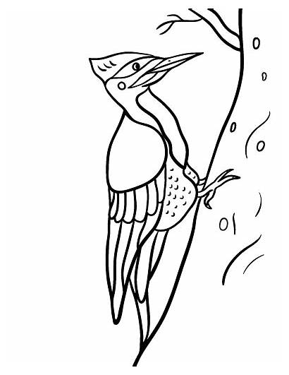 Woodpecker Coloring Pages Printable Wood Coloringcafe Glass