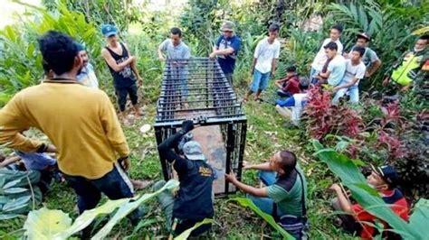 Mempersiapkan kandang merupakan salah satu faktor terpenting dalam ternak puyuh petelur ini. Wisata Ternak Kandang Macan : Bangunan kecil di bagian ...