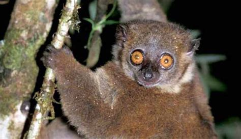 Poorly Known Species At Most Risk From Extinction Cool