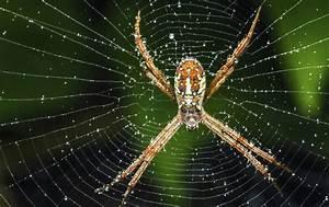 Se Débarrasser Des Araignées : oui les araign es mangent aussi des poissons buzz ~ Louise-bijoux.com Idées de Décoration