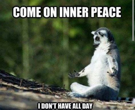 Inner Peace Meme - pin by michelle briscoe on funny but true pinterest inner peace humor and wisdom quotes