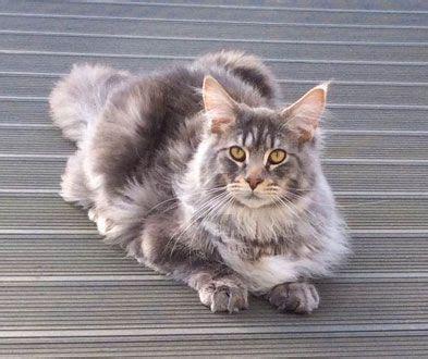 images  crazy cat lady  pinterest