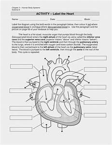 Diagram Of Heart Answers