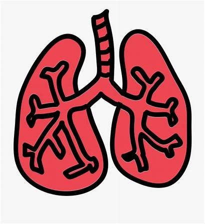 Lungs Lung Icon Cartoon Netclipart Tags