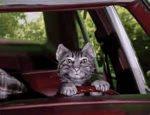 the cat who toonces the cat who could drive a car raiders of the