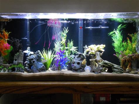 benefits of a fish tank and the science feng shui it