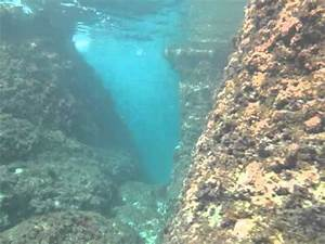 Underwater canyons near Crna punta, Krnica - YouTube
