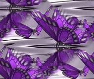 Beautiful Purple Butterflies