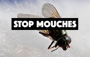 Comment Chasser Les Mouches : comment combattre les mouches dans une maison ~ Melissatoandfro.com Idées de Décoration