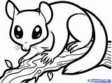 Glider Sugar Coloring Draw Nocturnal Possum Animals Drawing Colouring Clipart Sheets Dragoart Step Animal Aboriginal Gliders Australian Printable Drawings Ringtail sketch template