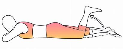 Prone Hamstring Curl Exercise Knee Lying Bend