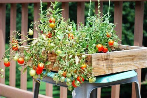 Brise-vue balcon et du00e9co en plantes 29 exemples splendides