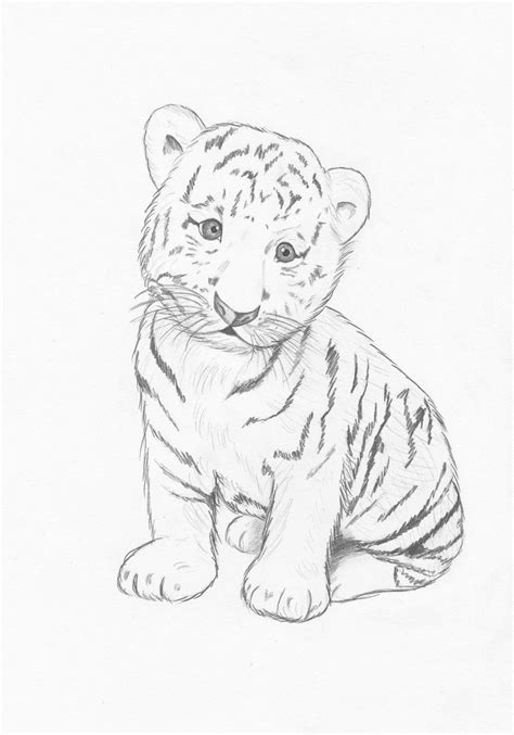 images  easy baby tigers drawings animals